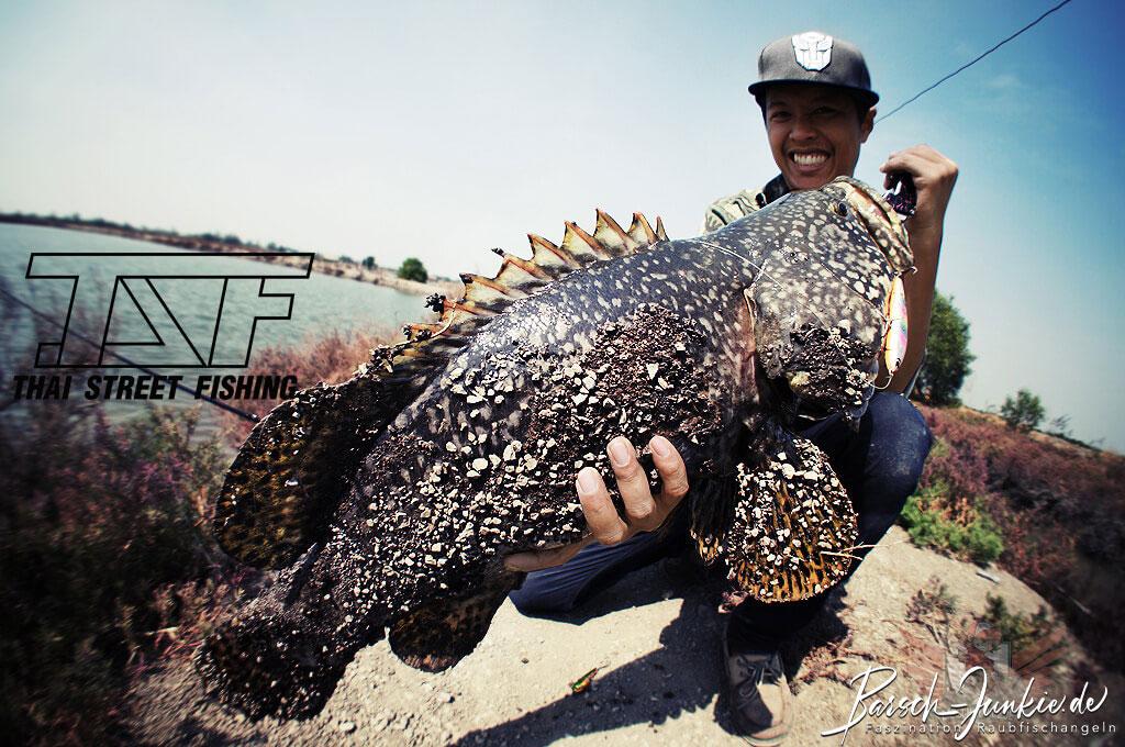 Thai Street Fishing Plus (TSF+) Interview