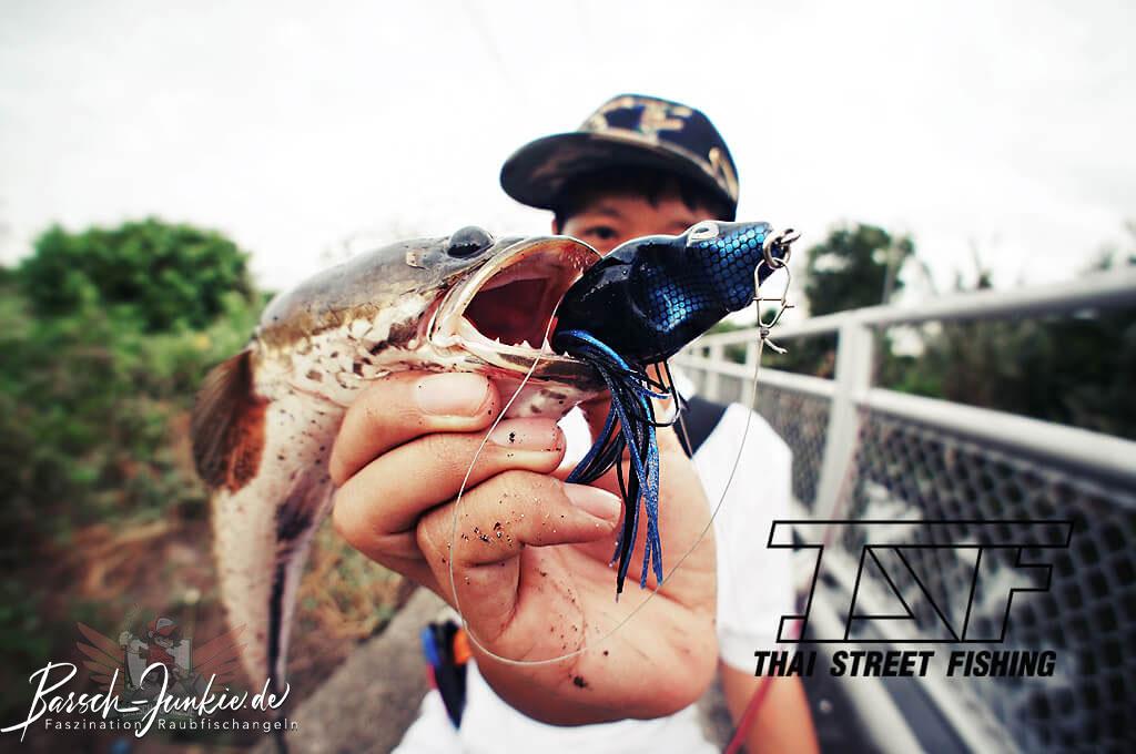 thai street fishing plus snakehead topwater