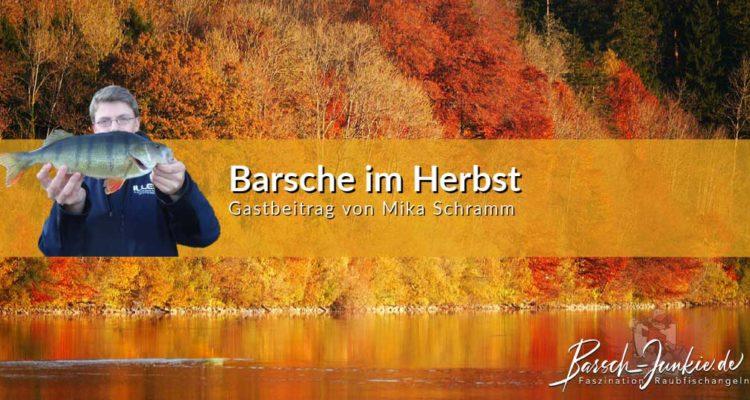 Barsche im Herbst Barsch-Junkie